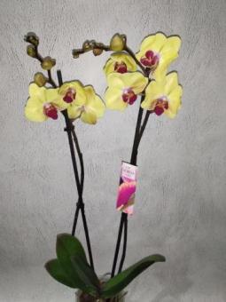Продам комнатные цветы в Луганске