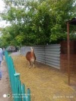 Поездки в зоопарк