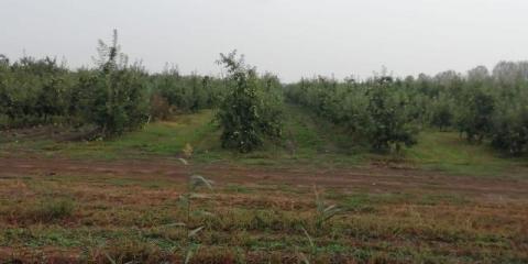 Срочно требуются мужчины и женщины для сбора яблок